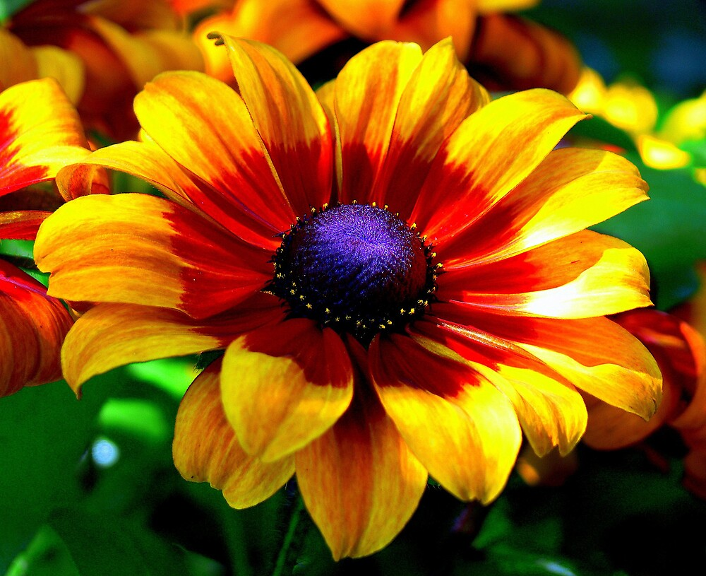 A Flower In Fall Coloring... by LjMaxx