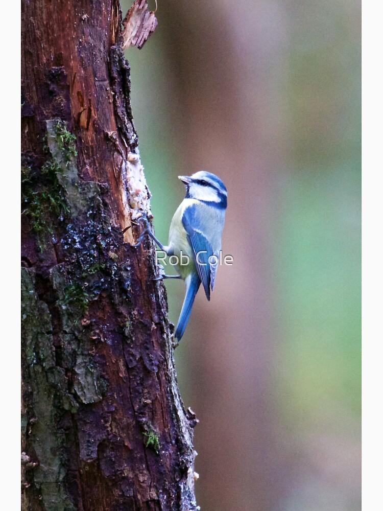 Blue Tit (Cyanistes caeruleus) by robcole