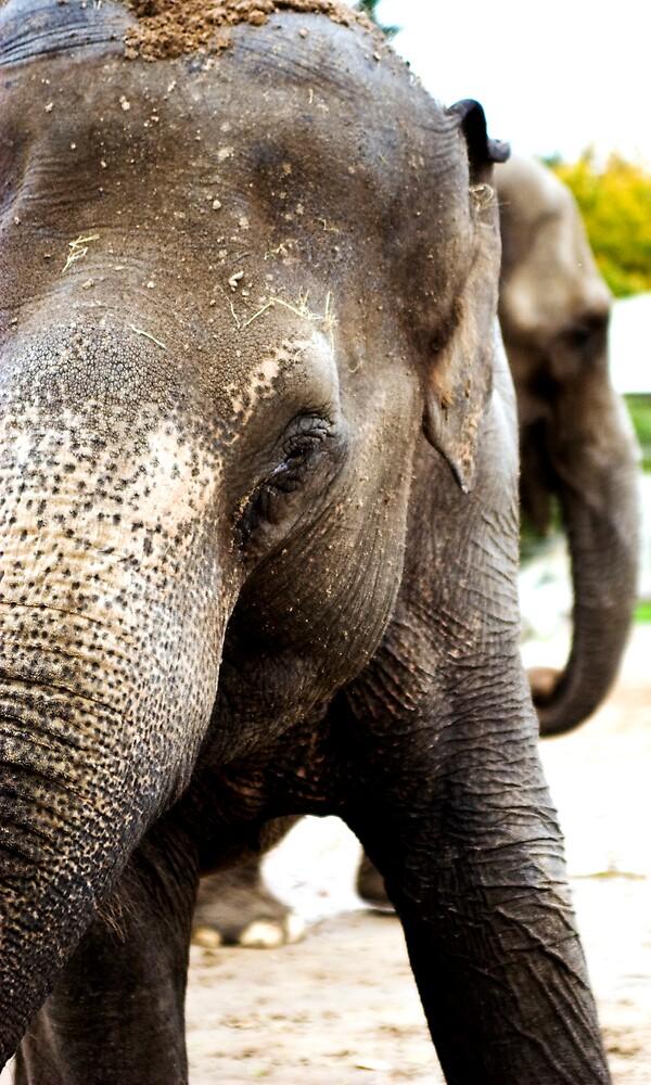 elephant by elswervio