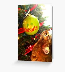Mesmerized Naughty Cat And The Christmas Tree Greeting Card