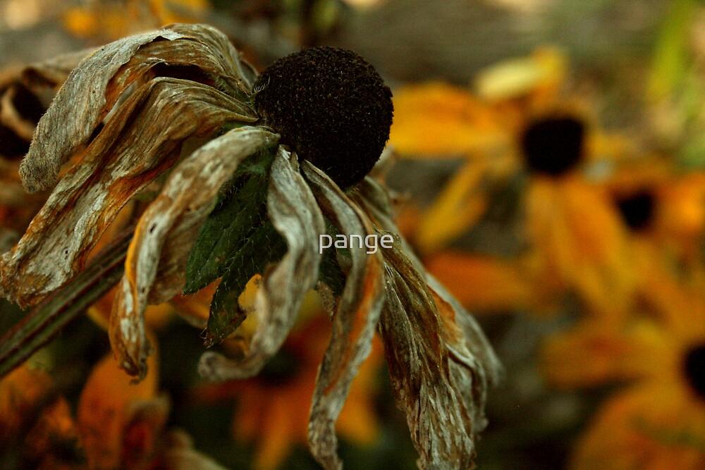 Autumn's Descent by pange