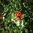 Berries by nikki harrison
