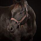 Black Quarter Horse I by HiddenRockRanch