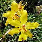 Yellow Orchids by Donna R. Cole