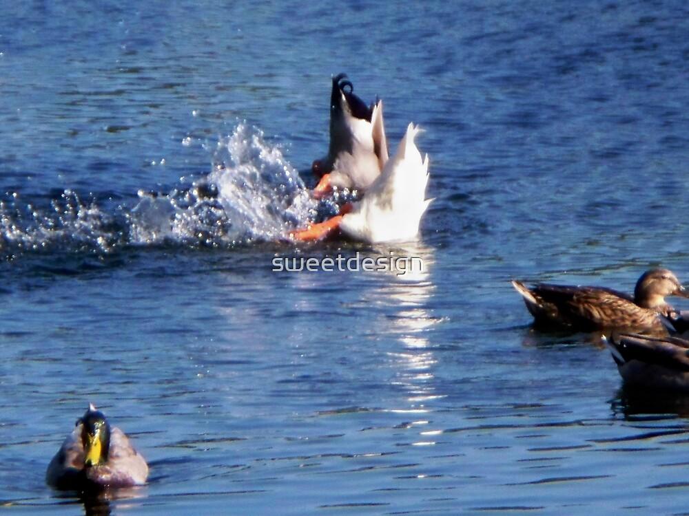 Synchronized Splashing? by sweetdesign