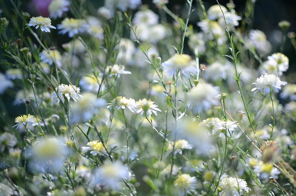 Flores Silvestres Blancas De Kathryn Kirschner Redbubble