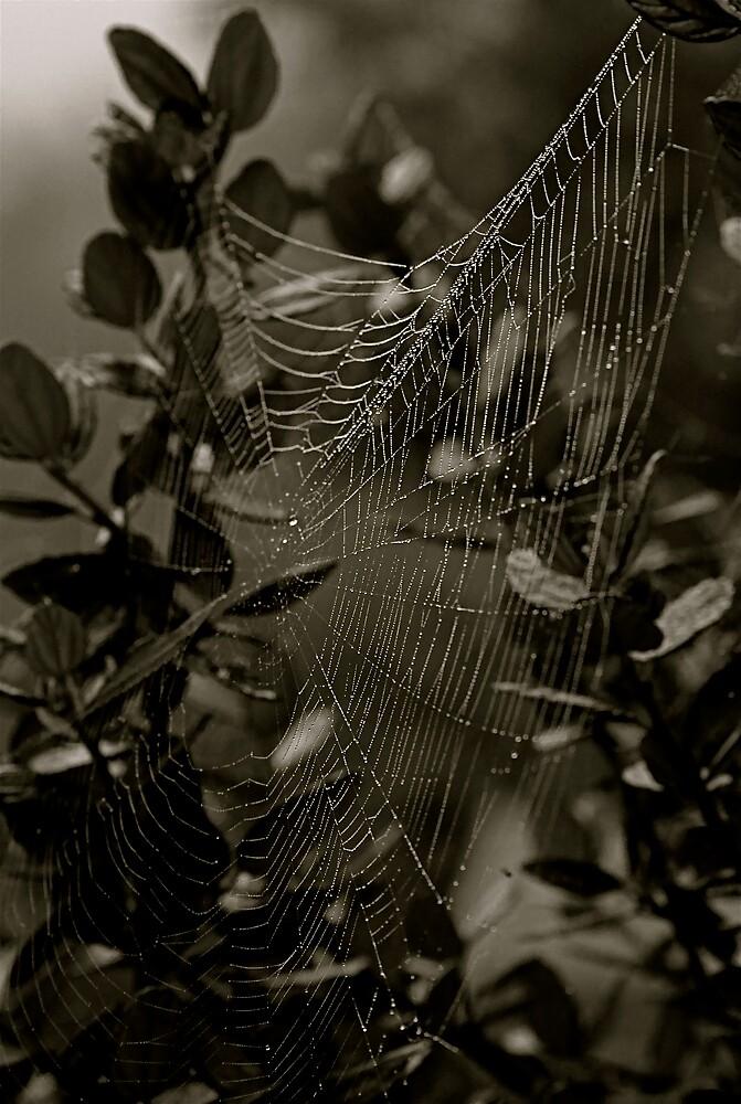 The Web by Oli Johnson