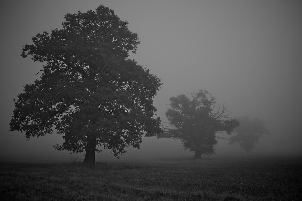 Trees in the Fog by Mattphotos