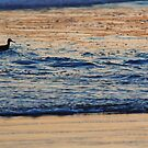 the sandpiper by Stephen Burke