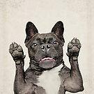 French Bulldog by eyevoodoo