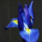 Feeling a Lil' Blue by Angel Warda