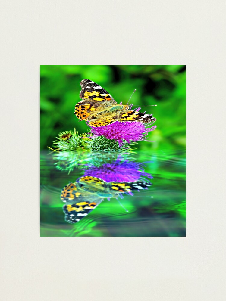 Alternate view of Butterfly reflection. Photographic Print