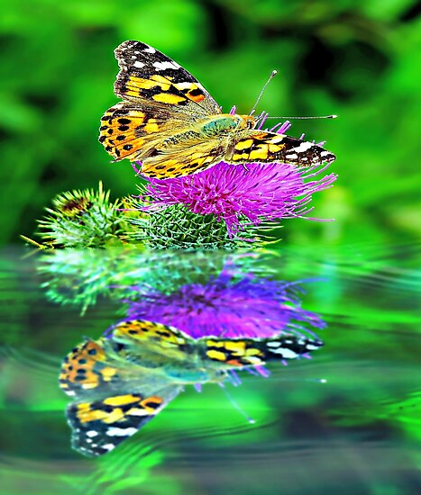 Butterfly reflection. by ScenicViewPics