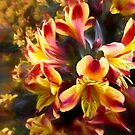 Flower art - Alstroemeria by David Tovey
