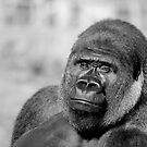 My Mate Primate by duroo