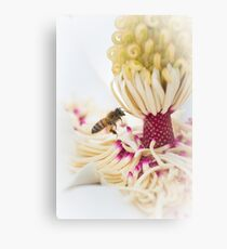 Southern Magnolia and a Bee Canvas Print
