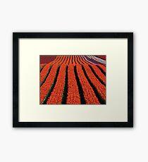 Ribbons of colour... Framed Print