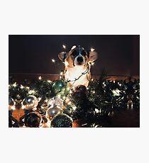 Corgi Christmas Photographic Print