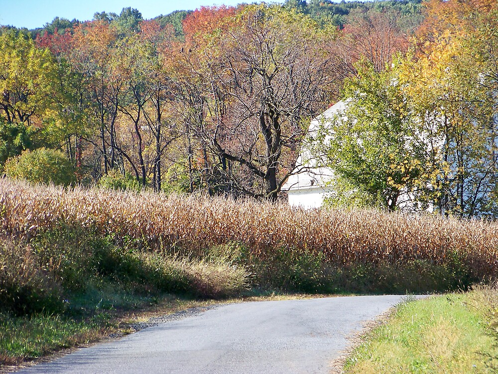 Country Road by Mindy Miller