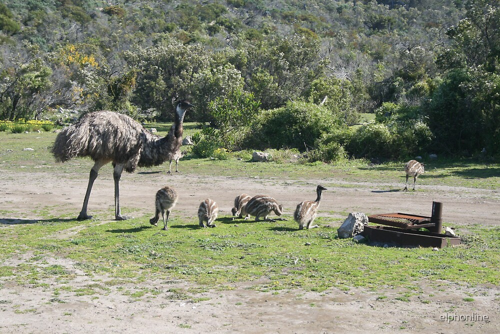 Emus at Coffin Bay National Park,S.A. by elphonline