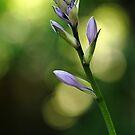 Purple Flower Buds by Debbie Oppermann