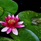 Lily And The Frog by Debbie Oppermann