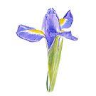Portrait of an Iris - Original botanical watercolour by Francesca Whetnall by Cecca-Designs