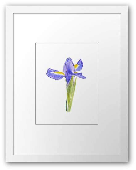 Portrait of an Iris - Original botanical watercolour by Francesca Whetnall by Cecca-Designs
