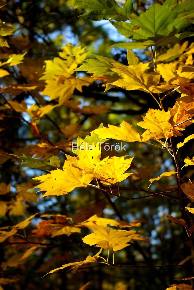 Fall Colors by Béla Török