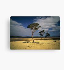 Broke Inlet Trees Canvas Print