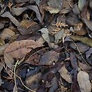 Autumn Leaves in Deep Forest by YLArt