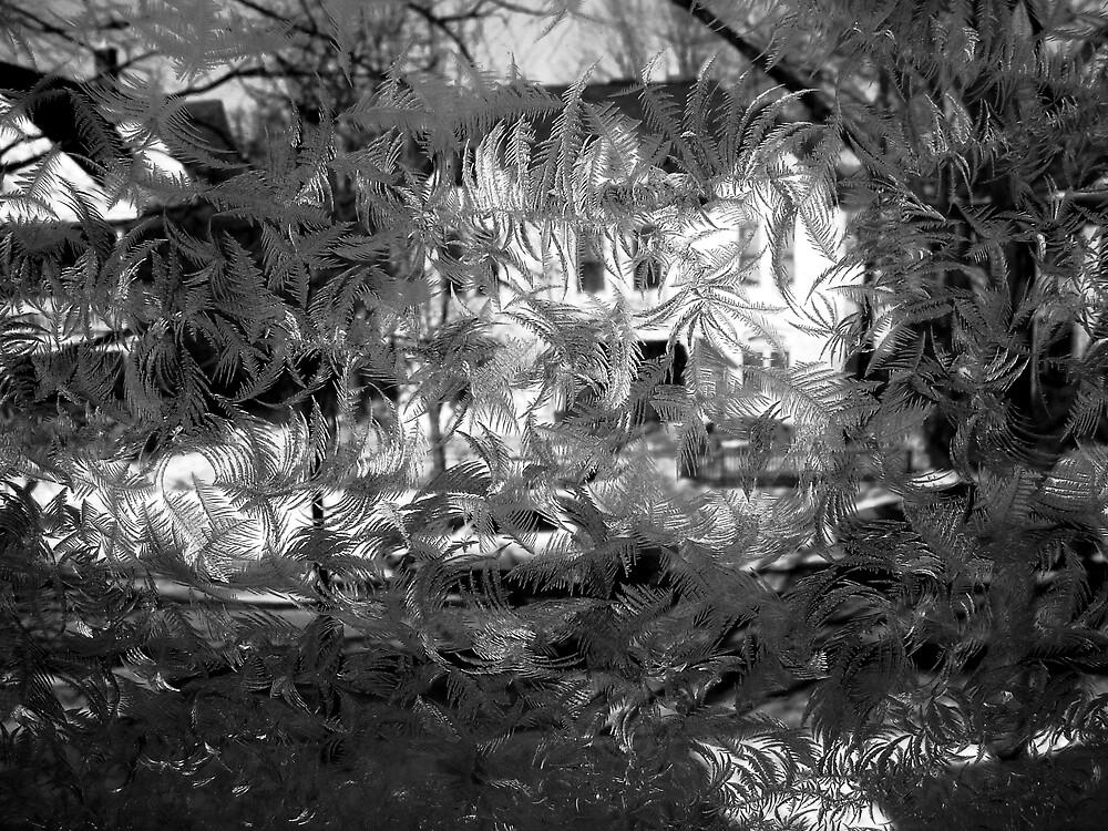 Winter Window #2 by Timothy Wilkendorf