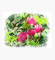 Bleeding Hearts with saying Photographic Print