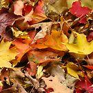 Autumn Leaves by Tammy F