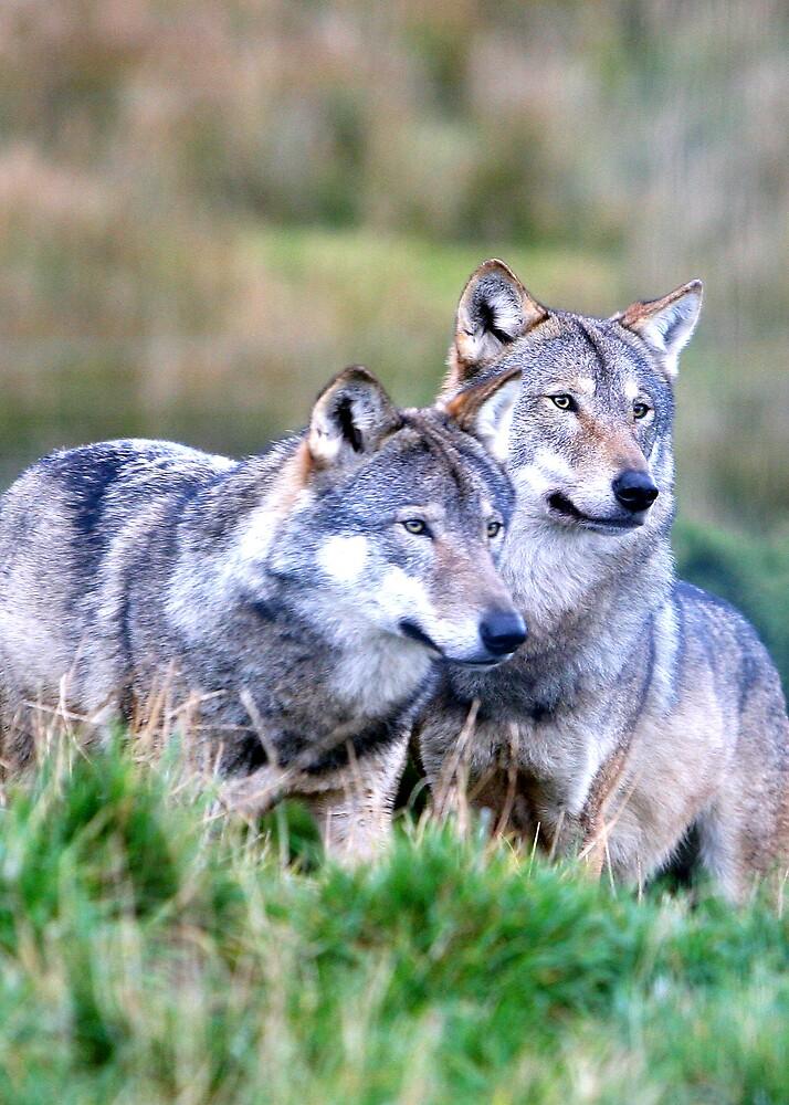 Wolves by dsargent