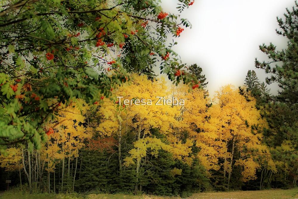 Autumn Colours XI by Teresa Zieba