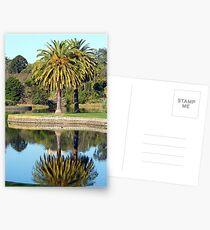 The Nympheas Lake Postcards
