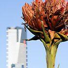 Gymea Flower by Frank Moroni