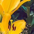 Blooming Gold by Belinda Osgood
