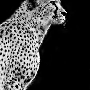 Cheetah by SeeThinkCreate