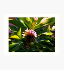 Soft flower pod Art Print