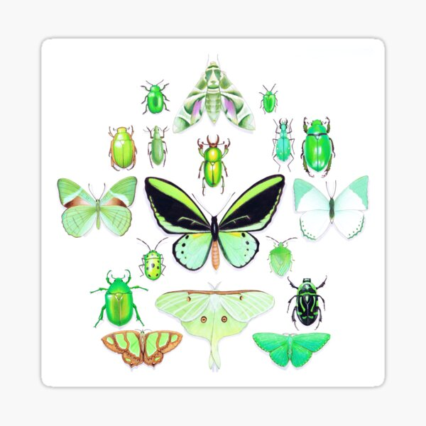 Green Insect Collection Sticker