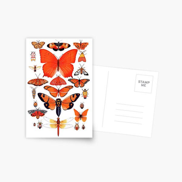 Orange Insect Collection Postcard