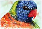 Rainbow Lorikeet - Watercolour by Paul Gilbert