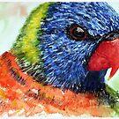 Rainbow Lorikeet - Watercolour by Paul Gilbert