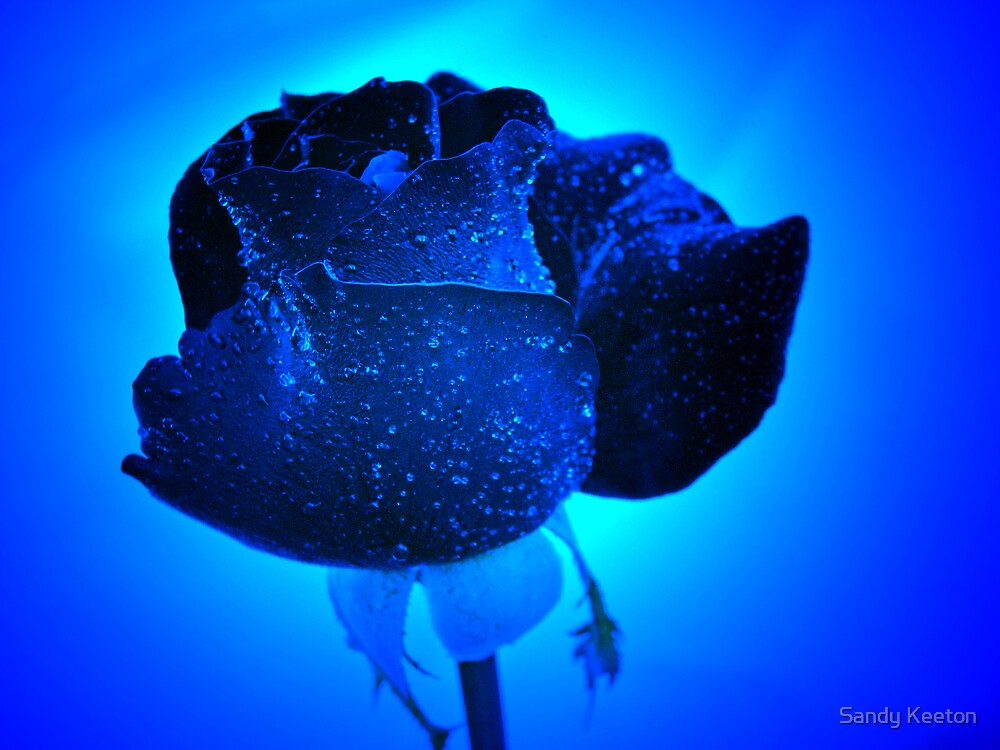 Rosebud in Blue by Sandy Keeton