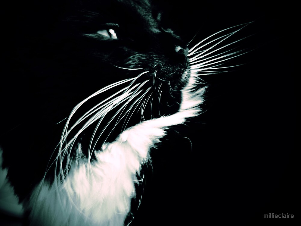 Pretty Kitty by millieclaire