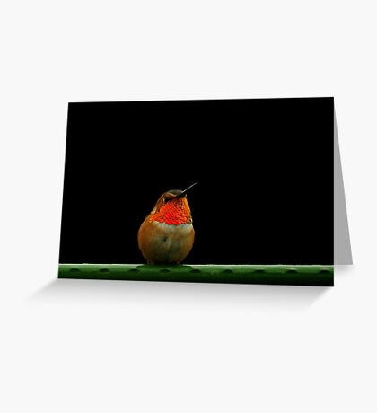 RUFUS HUMMINGBIRD~ Greeting Card