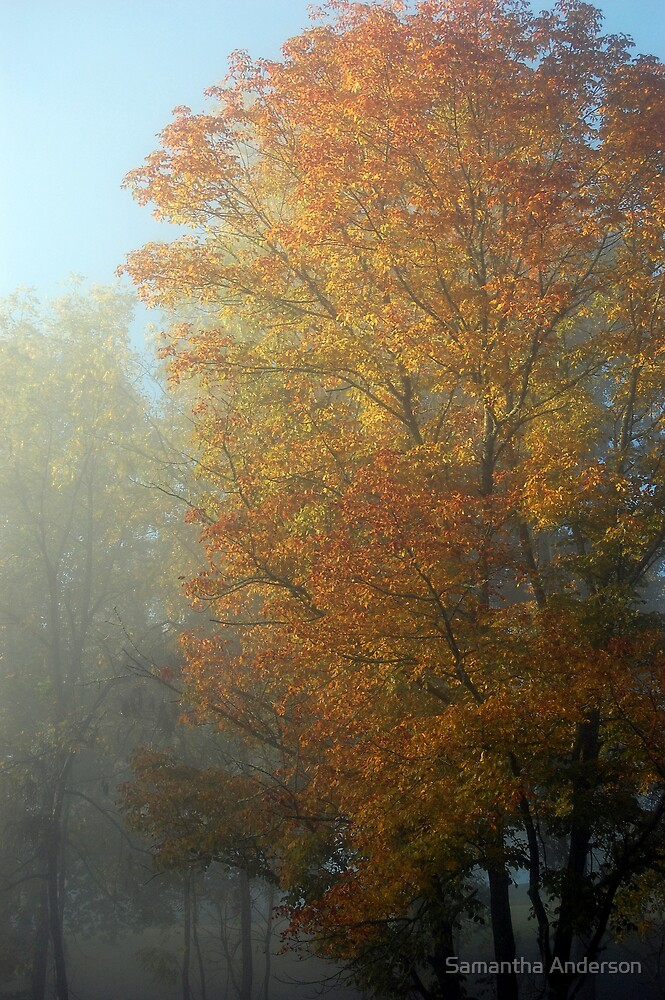 Autumn Colors by Samantha Anderson