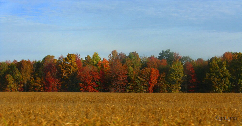 Color Over the Corn Field by CynLynn